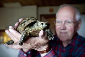 Hans med sitt kära husdjur, sköldpaddan Kalle, som förmodligen är jämnårig med honom själv.