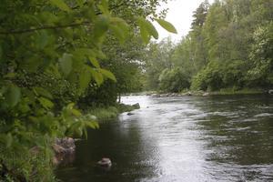 Fiskevårdsprojektet finansieras med både skattemedel och bidrag utifrån.