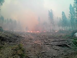 14 000 hektar skog brann upp sommaren 2014. Nu skildras händelsen händelsen både på teaterscenen och konstmuseet.