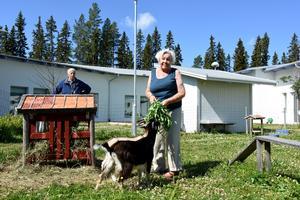 Birgit Hansson och Arne Källman bland killingarna.