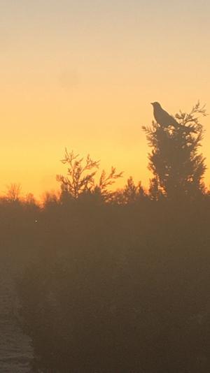 En oktobermorgon klockan 06.46. Foto: Engla Karlsson
