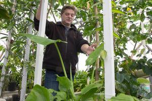 Björn Oliviusson äger och driver det resurssnåla och innovativa växthuset invid Berga naturbruksgymnasium i Västerhaninge.