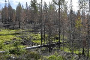 Grönska och sönderbränd skog.