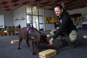 När hunden markerat rätt behållare ges en belöning.