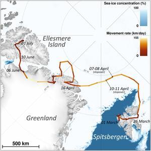 Satellitdata visar hur fjällräven började sin färd på Svalbard i Nordnorge och slutade på Ellesmere ön i norra Kanada. Illustration: Norska institutet för naturforskning