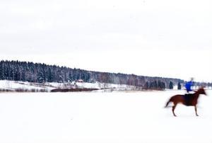 Hästarna körs mest i skogen men snöfattiga vintrar brukar Hans ploga upp en bana på sjön, men han ger sig inte ut med traktorn förrän isen är minst 30 centimeter. Nu är den 15 och det är tillräckligt för att kunna rida på hästarna där.