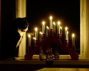Vår gamle Josef, 17 år, firar stillsam advent. Han var som ung den tuffaste katt vi haft. Fadern förmodad vildkatt enligt säljarna. Bild: Clas Harrysson