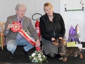 Best in show för strävhårig normaltax blev Bellomis Storm. Ägare är Maria och Magnus Hellström. Foto: Marie Kvenild
