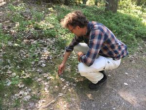 I Råbyskogen finns många djur. Här är det en jordhumla som letar efter en plats för att bygga bo. I skogen finns också en hel del ovanliga svampar.