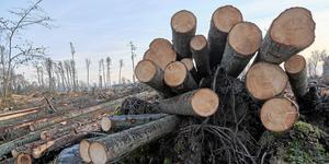 Staten måste ta ett större ansvar när det gäller konflikten mellan miljöintressen och trävaruproducenter, skriver insändarskribenten.