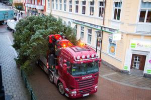 Årets gran är stor och transporterades på en lastbil.