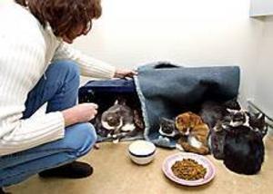 ARKIVBILD Omhändertagna. Här är några av de 24 katter som har omhändertagits på grund av vanvård. Trots att kattägaren tidigare inte skött sina katter får hon behålla tre.