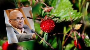 Murad vill att örebroarna ska få gratis frukt och bär i Örebro.