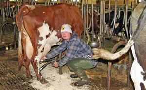 Det låga mjölkpriset slår hårt mot Vilhelm Nyman.