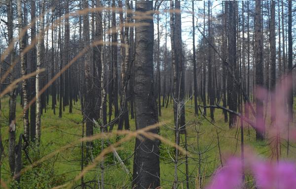 Taget vid Hälleskogsbrännan 4/8-16