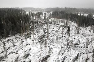 Skogsägare med mycket gran och dålig bärighet måste agera, tycker Leif Härjegård, SCA.