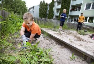 Hjälpte till. Sjuåriga Anton Jönsson rensade ogräs med stor energi. Ett år äldre storebrorsam Ludvig skulle gärna vilja ha en större klätterställning på lekplatsen.