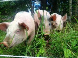 Under juli bodde de på en gård med djur.