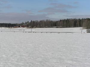Rådjur på vårpromenad norr om Julpa. Ytterligare några kom inte med på bilden där det är 14 stycken. Foto: Sven Martin