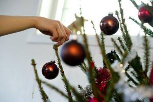 Julgranar finns att köpa för den som inte äger egen skog.