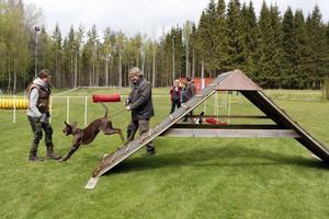 Här går det undan. Johanna Toftling Gustavsson och Tommy Gustafsson testar agilitybanorna med forstern Brassa.