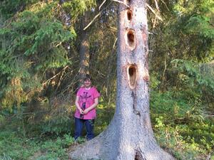 Detta träd stötte vi på i mörkaste Småland.Vi fick från säker källa reda på att det är en spillkråka som gjort dom märkliga hålen. Hålen var så djupa att dom nästan gick igenom hela stammen.Konstigt nog var trädet grönt upptill.Min dotter Emma var också nyfiken på trädet.