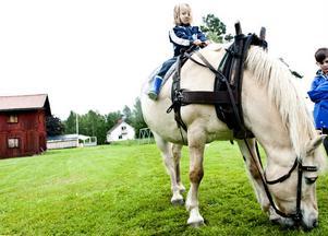 Gustav Stavbom, 5 år, Uppsala, ska strax få rida runt hembygdsområdet på hästen Pluto. Arne Eriksson, Delsbo kör- och ridsällskap, leder honom.