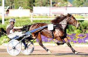 Lannem Silje imponerade stort när hon tog sin 20:e raka seger. Hon gjorde det på 1.24,3a/2 140. Nu tror alla att hon även vinner Svenskt Kallblodsderby.