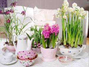 Botanisera bland udda fat, koppar och kannor i skåpen. Det mesta funkar för ett blomsterarrangemang.