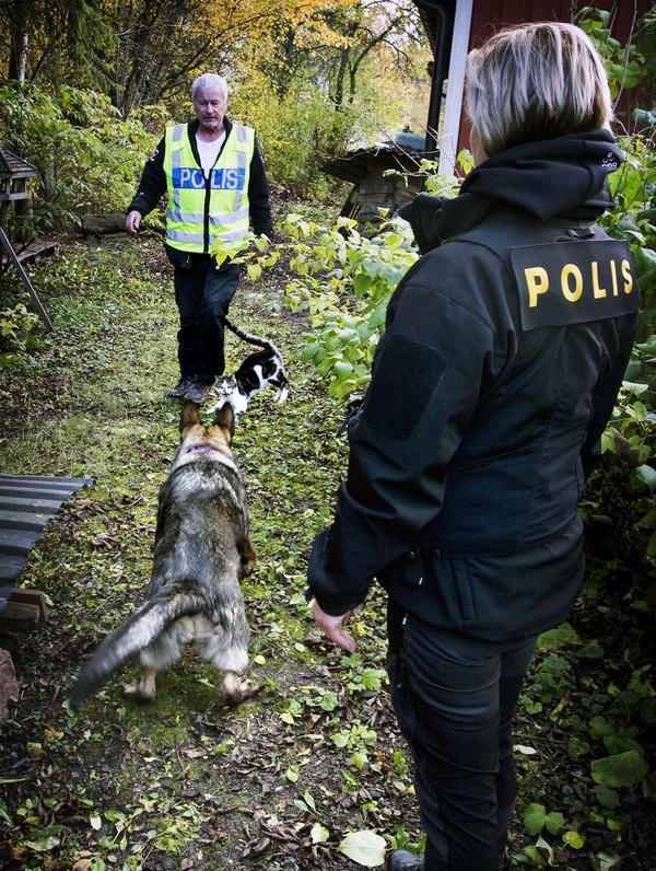 Benny Andersson, Ilya och Charlotte Glatter tillsammans med okänd hankatt. Katten dök upp mitt under söket och visst reagerade Ilya men hon fortsatte påfallande snabbt att söka igen. Katten följde sedan med poliserna under resten av söket utan hundarna lät sig störas.