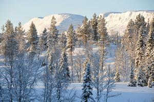 Vinterbilder från Portfjellet i Frostviken vid riksgränsen till Norge.