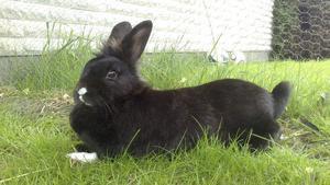 Kaninen Mia dog efter att ha blivit biten. Foto: Privat