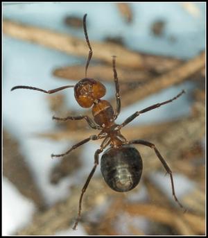 Myra underifrån.