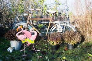 Flamingorna syns även i trädgården.