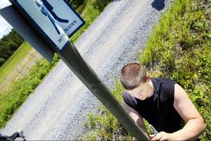 I bland används befintliga stolpar, som här Mittnordenledens för att markera att St Olofsleden. Ibland slår de ner en ny stolpe eller hänger upp en markering i ett träd.På bilden Daniel Backman.