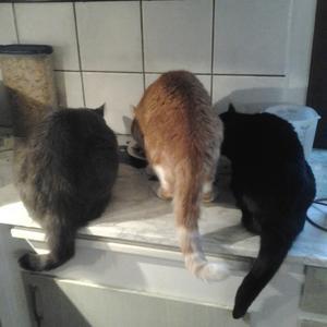 Sixten, Torsten och Gussie är vrålhungriga på morgonen.