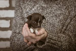 Köp aldrig en valp på Blocket och få den levererad till exempelvis en parkeringsplats. Många smugglade hundar säljs via mellanhänder.   Foto: Shutterstock.com