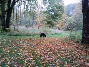 Jag å min hund var ute å knatade å han försöker hitta en kotte eller en pinne. Buster njuter å få springa av sig i mellan åt.