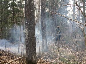 Polisen har upprättat en polisanmälan om allmänfarlig vårdslöshet efter gräsbranden i Folkärna, i Avesta kommun.