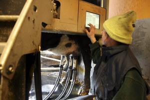 Agnes Rosander, Finnerödja, jobbar på Träntorps gård. I arbetsuppgifterna ingår att mjölka 130 kor med hjälp av en mjölkrobot.