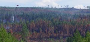 Vid flera av bränderna i länet brann skogen till del längs marken och några meter upp längs stammarna, men på vissa ställen gick branden upp i kronorna och det blev toppbrand.