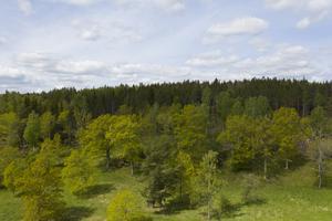 Det är ologiskt att vi skulle vilja avverka de allra finaste naturområdena, skriver artikelförfattarna.