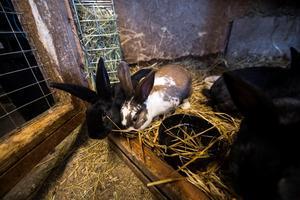 I stallet går det bland annat att hitta sju kaniner.
