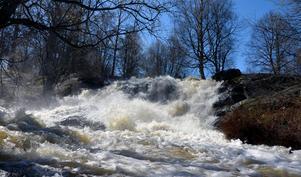 I Sidsjöbäcken forsade vattnet fram med full kraft.