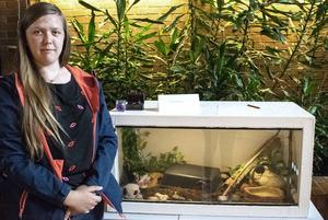 Jennifer Andersson bygger egna terrarium. Under mässan fick besökarna ge förslag på namn till ormen som följde med och visade upp sitt nya hem.