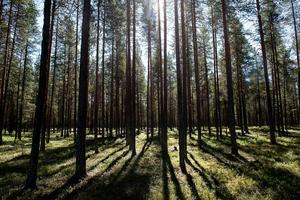 Det är inga dramatiska förändringar när det gäller skogsägare, men de bli färre i Dalarna.