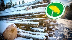 Miljöpartiet lyfter bland annat fram stöden till Skogsstyrelsen och SCA:s ansvar för den biologiska mångfalden i de nordliga skogarna, som ett steg till ett grönare län.