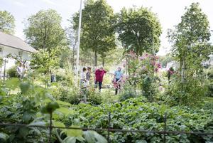 Många spanade in rabatter och köksträdgården. Pär Stawåsen, i röd tröja, visar och berättar.