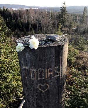 En av Tobias favoritplatser, med vid vy. Stubben har blivit familjens minnesplats. Foto: Privat