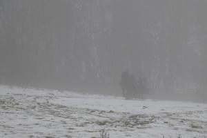 Dimman gjorde det svårt att se ekipaget på lite håll.